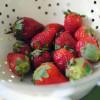 Verdens nemmeste picnic-dessert med jordbær!
