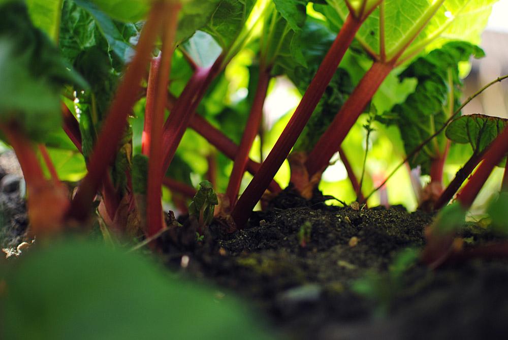 Opskrift: Rabarbergrød | Frk. Kræsen