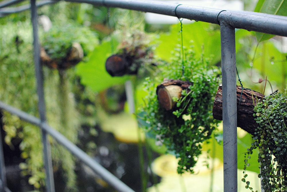 Botanisk have i Lund | Frk. Kræsen