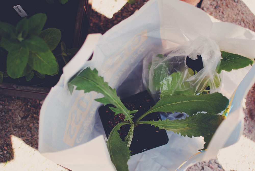 Plante-loppemarked i Sverige | Frk.Kræsen